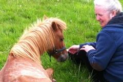 healing the sick horse